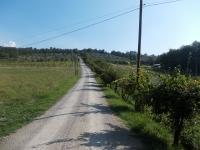 strada_per_agriturismo_corzano